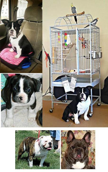 Clockwise from top left: Jedi shown in the car and at the bird rescue, Jedi's proud parents and a puppy pic at six weeks.