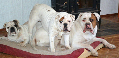 Can we fit another bullie? Dont think so!