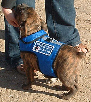 "RMR's OEB pup ""Hickory"" showing off his service-dog jacket"